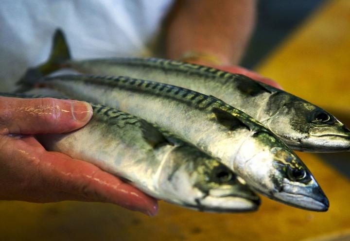 Norwegischer Frischfisch